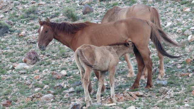 wild horses - cavalla video stock e b–roll