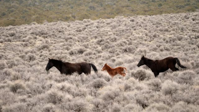 wild horses - mustang video stock e b–roll