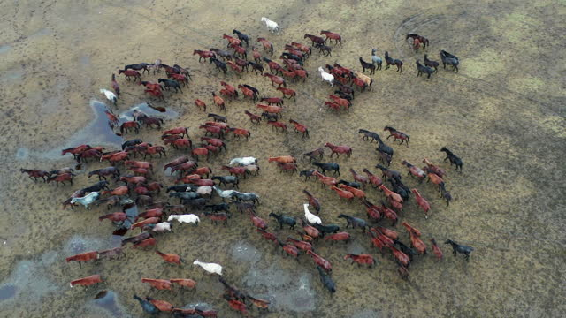 Wild Horses Aerial View of Wild Horses in Kayseri / Turkey. Taken via drone. 4k video mustang wild horse stock videos & royalty-free footage