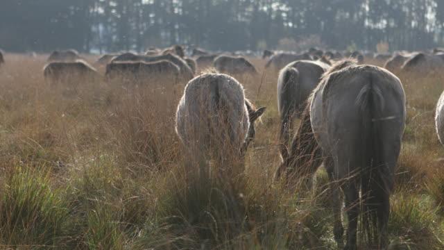wild horses Horse, Ranch, Farm, Fog, Winter,Sunny mustang wild horse stock videos & royalty-free footage