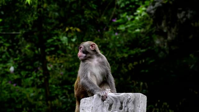 günlük yaşam-maymun vahşi makaklar orada oturuyor - makak maymunu stok videoları ve detay görüntü çekimi