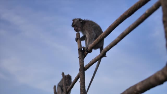 Wild monkeys on top of a volcano on a tropical island