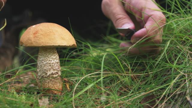 vild svamp i grön skog - höst plocka svamp bildbanksvideor och videomaterial från bakom kulisserna