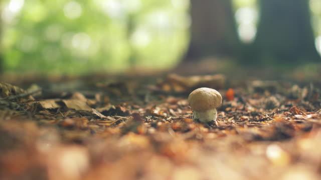 vild svamp i soliga skog - höst plocka svamp bildbanksvideor och videomaterial från bakom kulisserna