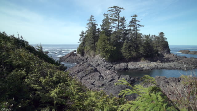 Wild Pacific Trail Ucluelet Vancouver Island 4K UHD video
