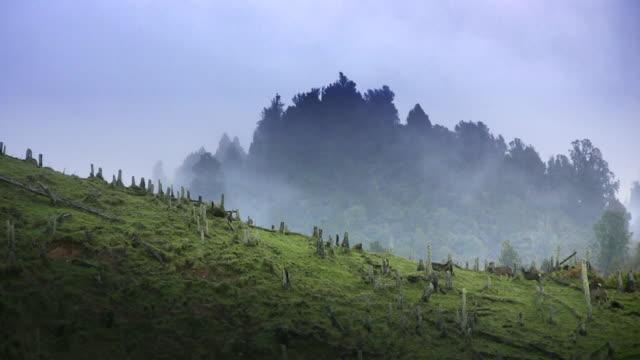 Wild Red Deer in New Zealand video