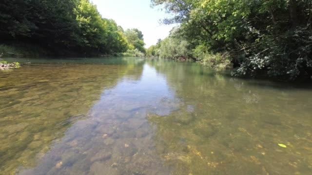 野生川 vipava - 水鳥点の映像素材/bロール