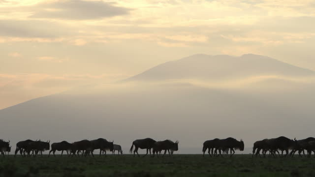 wildebeest walking past a cloudy mountain. - wildlife travel stock videos & royalty-free footage