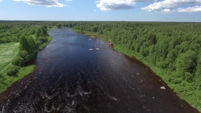 wildnis-fluss in skandinavien - kiefernwäldchen stock-videos und b-roll-filmmaterial