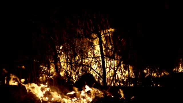 vidéos et rushes de traînée de poudre dans la nuit. forêt de fumée brûlante. - étendue sauvage scène non urbaine