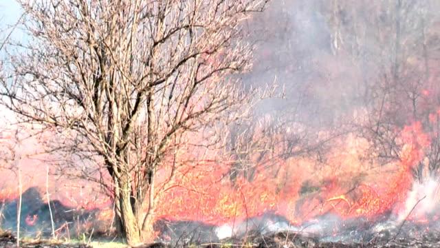 wildfire nel bush con conseguente incendio boschivo - incendio doloso video stock e b–roll