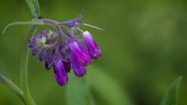 wildflower purple close up - центральная европа стоковые видео и кадры b-roll