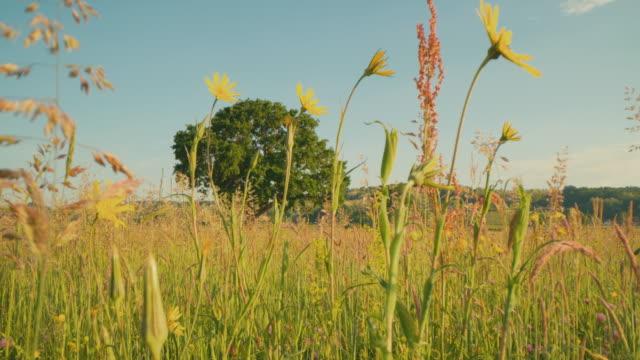 晴れた日のdsワイルドフラワーと単一の木 - ローアングル点の映像素材/bロール