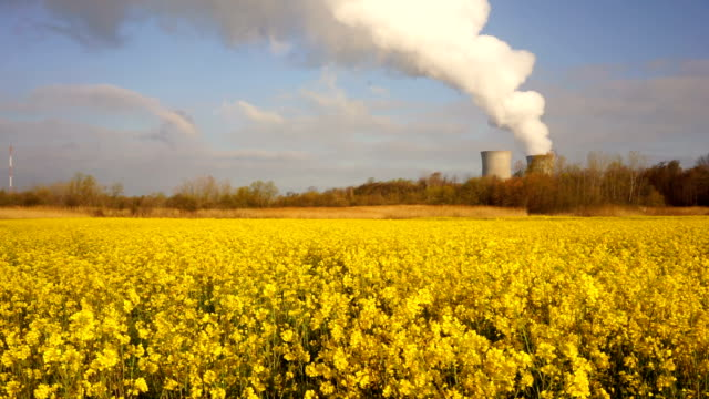 Wildflowers Exists Under Exhaust Plume Nuclear Power Plant Alternative Energy video