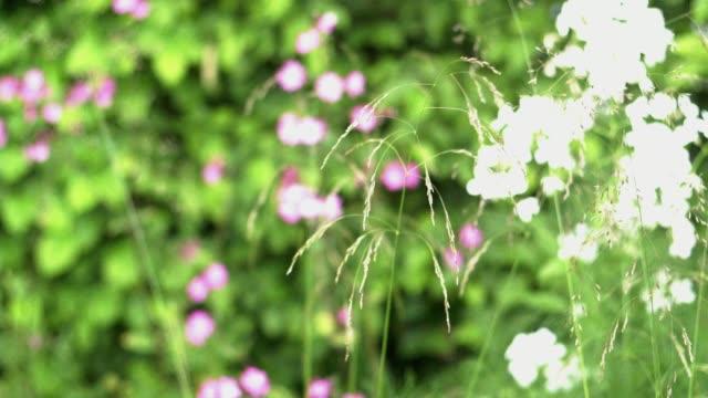 Wilde bloemen in de tuin video