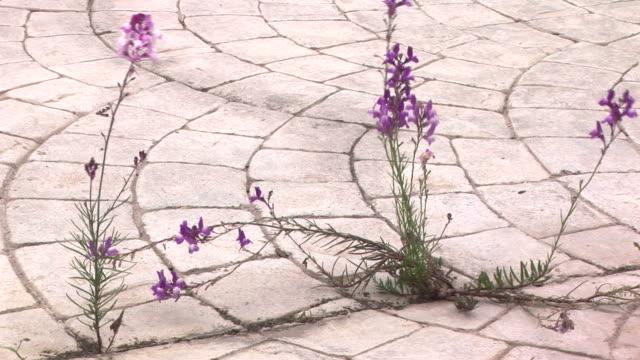 fiori selvatici passaggio - marciapiede video stock e b–roll