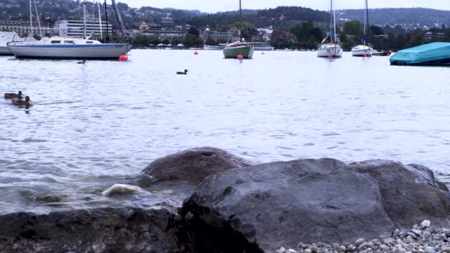 Wildlife on the Zurich city waterfront
