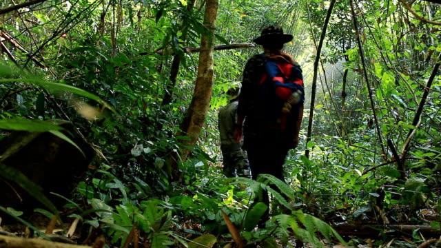 野生生物の写真家の中にある熱帯ジャングルの鳥 ビデオ