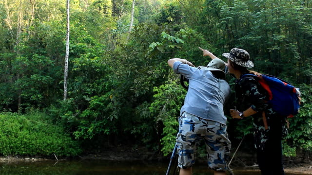 Wildlife Photographer taking picture of bird in the rainforest jungle video
