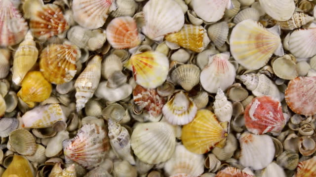 Wind along the coast with sea shells, approximation video