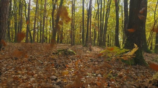 ms sonbahar esen wind uzak ormanda bırakır - styria stok videoları ve detay görüntü çekimi