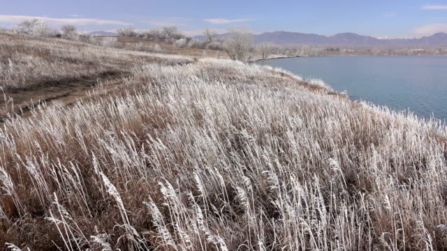 Wind blows frost covered grass Standley Lake Rocky Mountains Westminster Colorado video