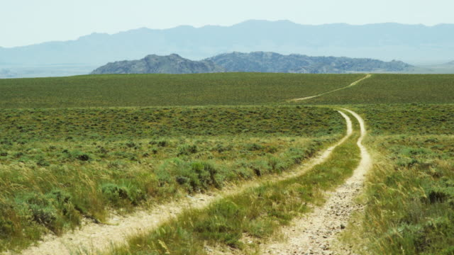 wind blows wild grasses along a dirt road cut in the wyoming prairie with mountains in the distance on a sunny day in wyoming - traccia video stock e b–roll