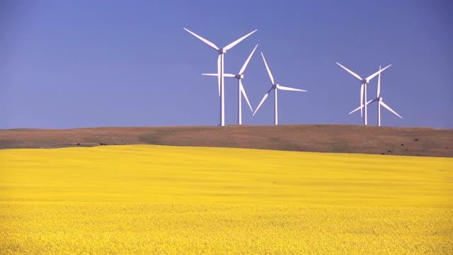 wind farm alternative energy - canola video stock e b–roll