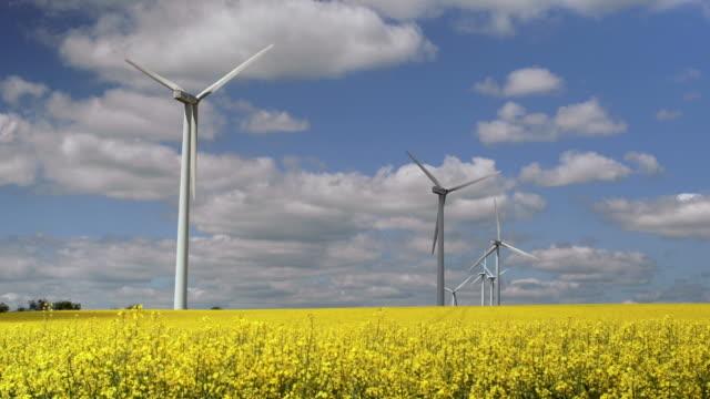vento fattoria in campo di colza in primavera - canola video stock e b–roll