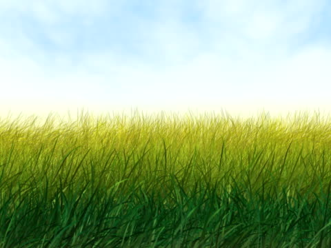 Wind in Grass PAL video
