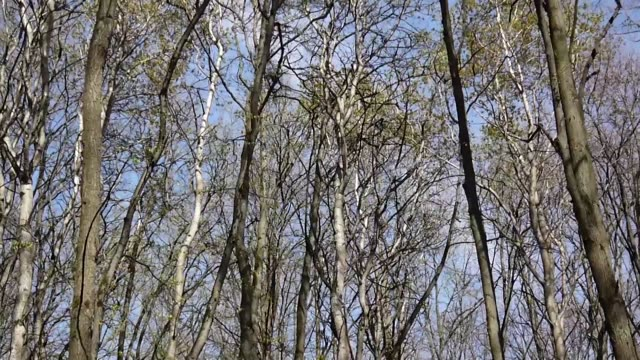 Wind in the forest. View on tree tops of trees in spring from the ground Wind in the forest. View on tree tops from the ground plant part stock videos & royalty-free footage