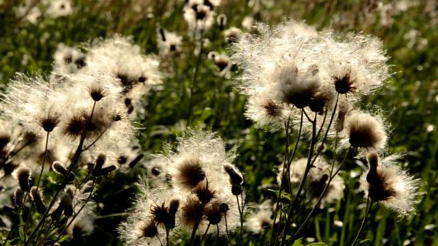 wind in the summer end plants - kabarık stok videoları ve detay görüntü çekimi