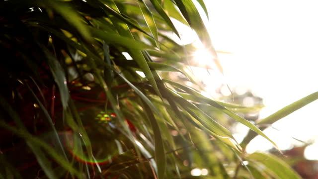 風力リーフの太陽 - 笹点の映像素材/bロール