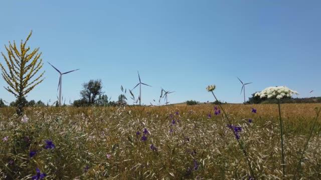 windmühlen sind auf dem feld und spikes blumen sind auf dem vorderboden 4k auflösung video schwenkt und kippt - elektrischer generator stock-videos und b-roll-filmmaterial