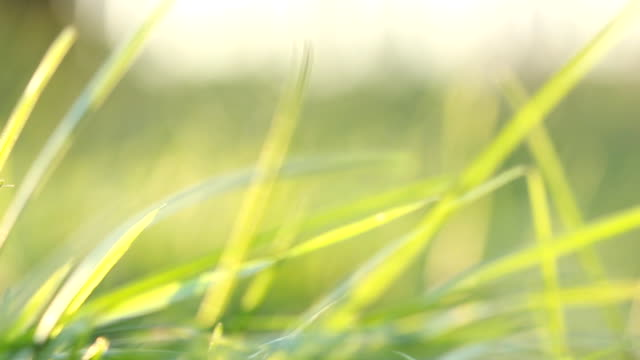 Wind moves green grass leaves - zooming background video