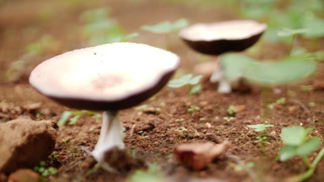 vindsvampar i skogen, 4k - höst plocka svamp bildbanksvideor och videomaterial från bakom kulisserna