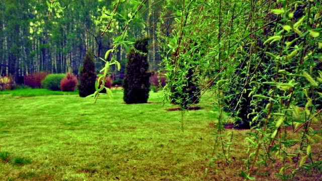 Wind on the Leaves Beautiful garden ornamental garden stock videos & royalty-free footage