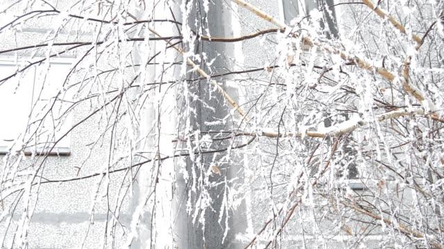 vind skakar trädgrenar på gården nära huset i vinter - lucia bildbanksvideor och videomaterial från bakom kulisserna