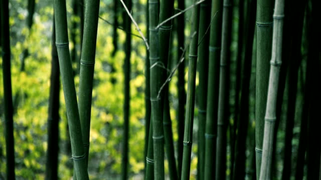 wind shaking bamboo,quiet atmosphere. video