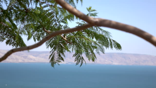 Wind Shaking Tree Branch with Clear Sky and Sea of Galilee video