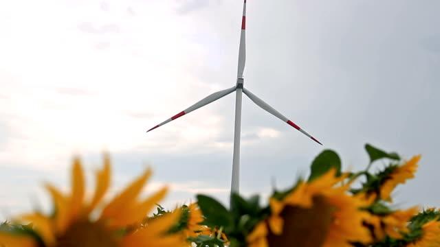 windturbine und sonnenblumen - elektrischer generator stock-videos und b-roll-filmmaterial