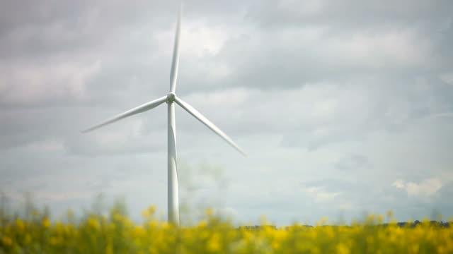 Wind Turbine In Field Of Oilseed Rape video