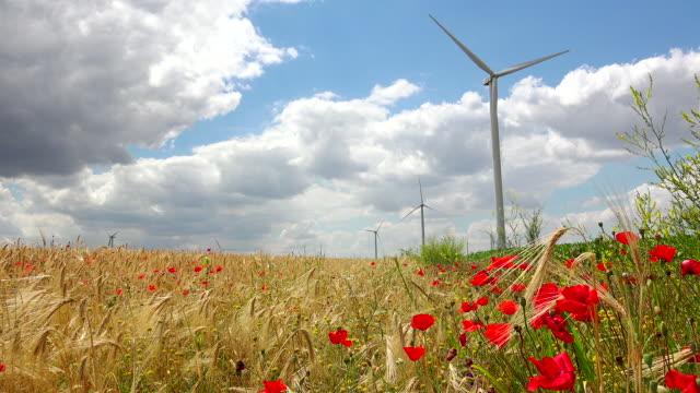 windrad auf roten mohn flowe - elektrischer generator stock-videos und b-roll-filmmaterial