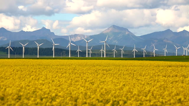 wind turbine renewable energy - canola video stock e b–roll