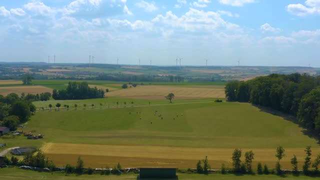 Wind turbines and cows on a meadow with sunshine.