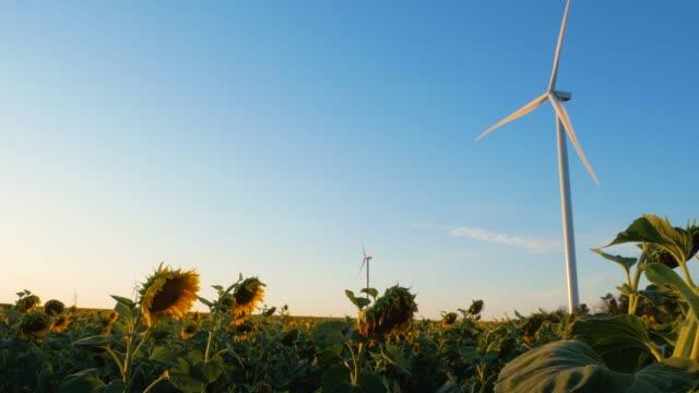 windkraftanlagen energiewandler auf gelben sonnenblumen feld bei sonnenuntergang. lokaler umweltfreundlicher windpark. ernten von landwirtschaftlichen kulturen, landerntehintergrund. grüne ökologische strom tapete - elektrischer generator stock-videos und b-roll-filmmaterial