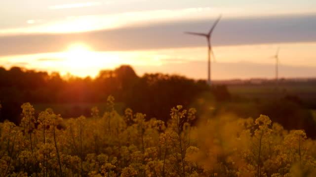wind turbines farms with rays of light at sunset - ekoturystyka filmów i materiałów b-roll