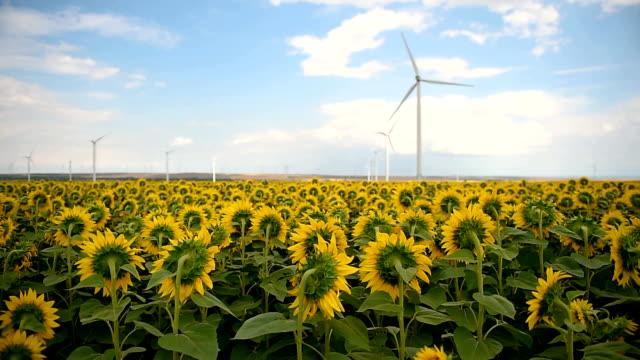 vídeos y material grabado en eventos de stock de turbinas eólicas en un parque eólico con un dramático cielo tormentoso en el fondo - generadores