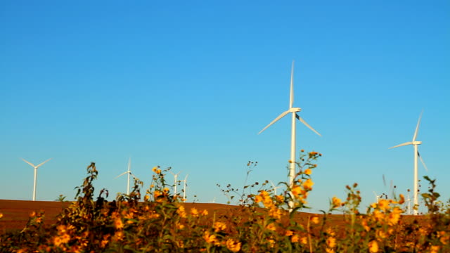Wind Turbines with Sunflowers video