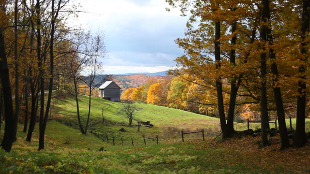 Windblown Autumn Leaves Windblown autumn leaves in Vermont barns stock videos & royalty-free footage